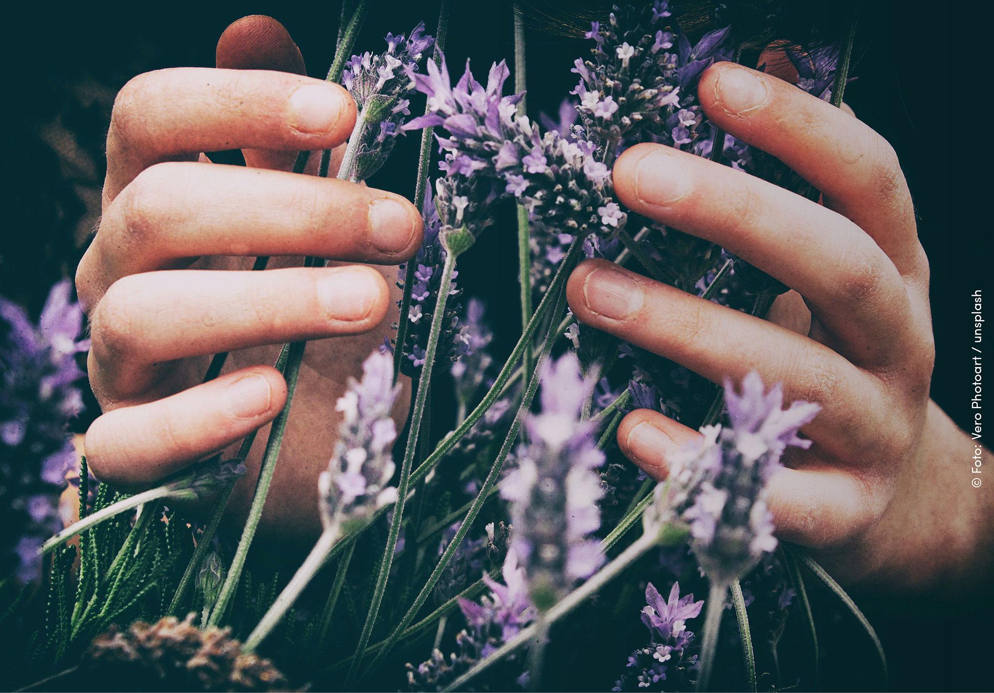 Einen bienenfreundlichen Garten pflanzen z.B. mit Lavender