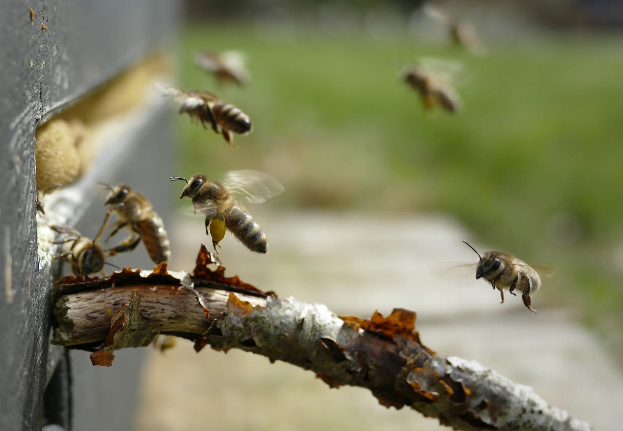 Bienen und wir