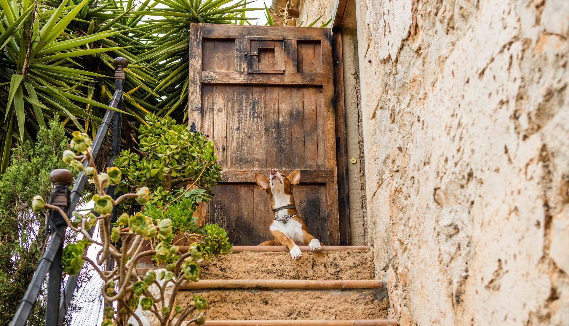 mit dem Hund im Urlaub