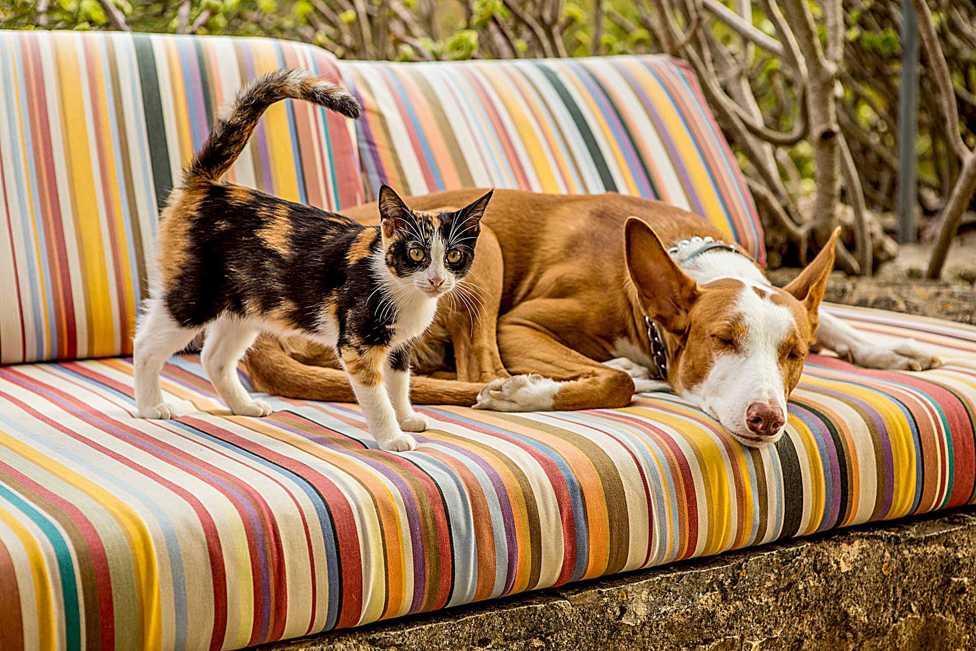 mit Hund und Katze im Urlaub