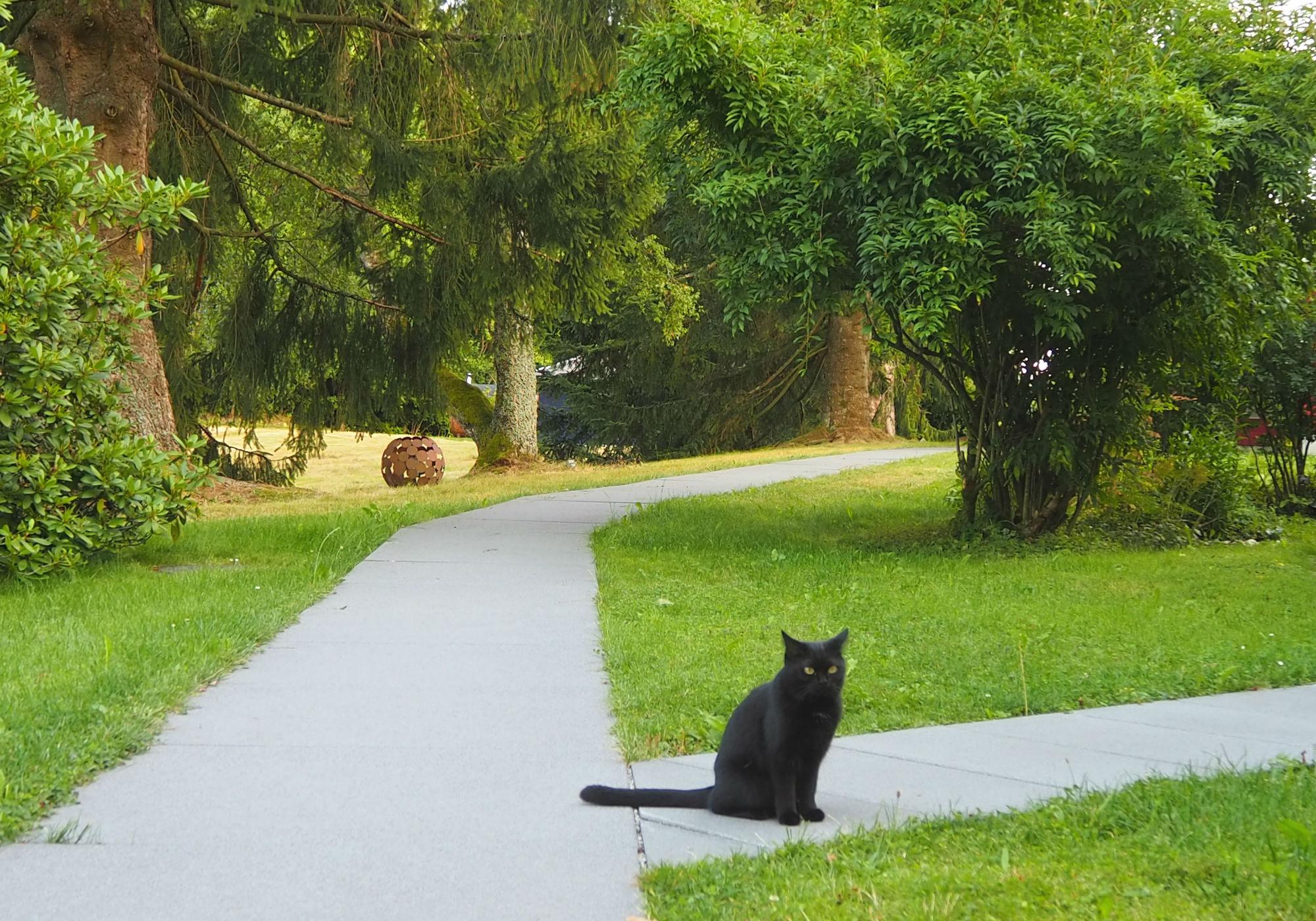 Die Katze Seven im 7 Sentidos