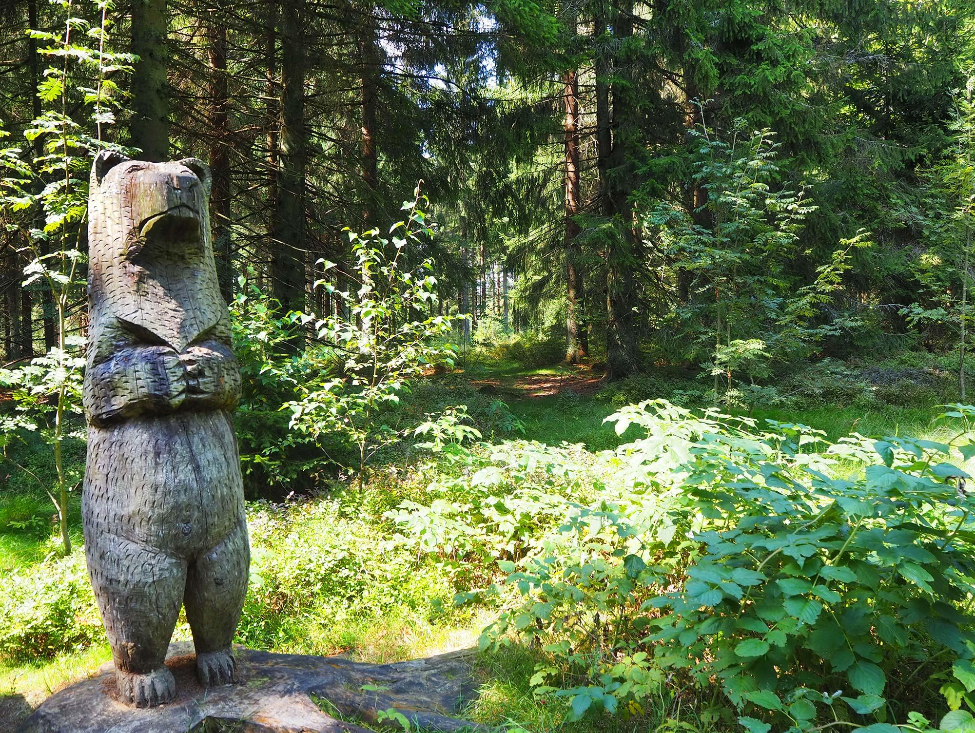 Waldwanderung durch den Bayerischen Wald
