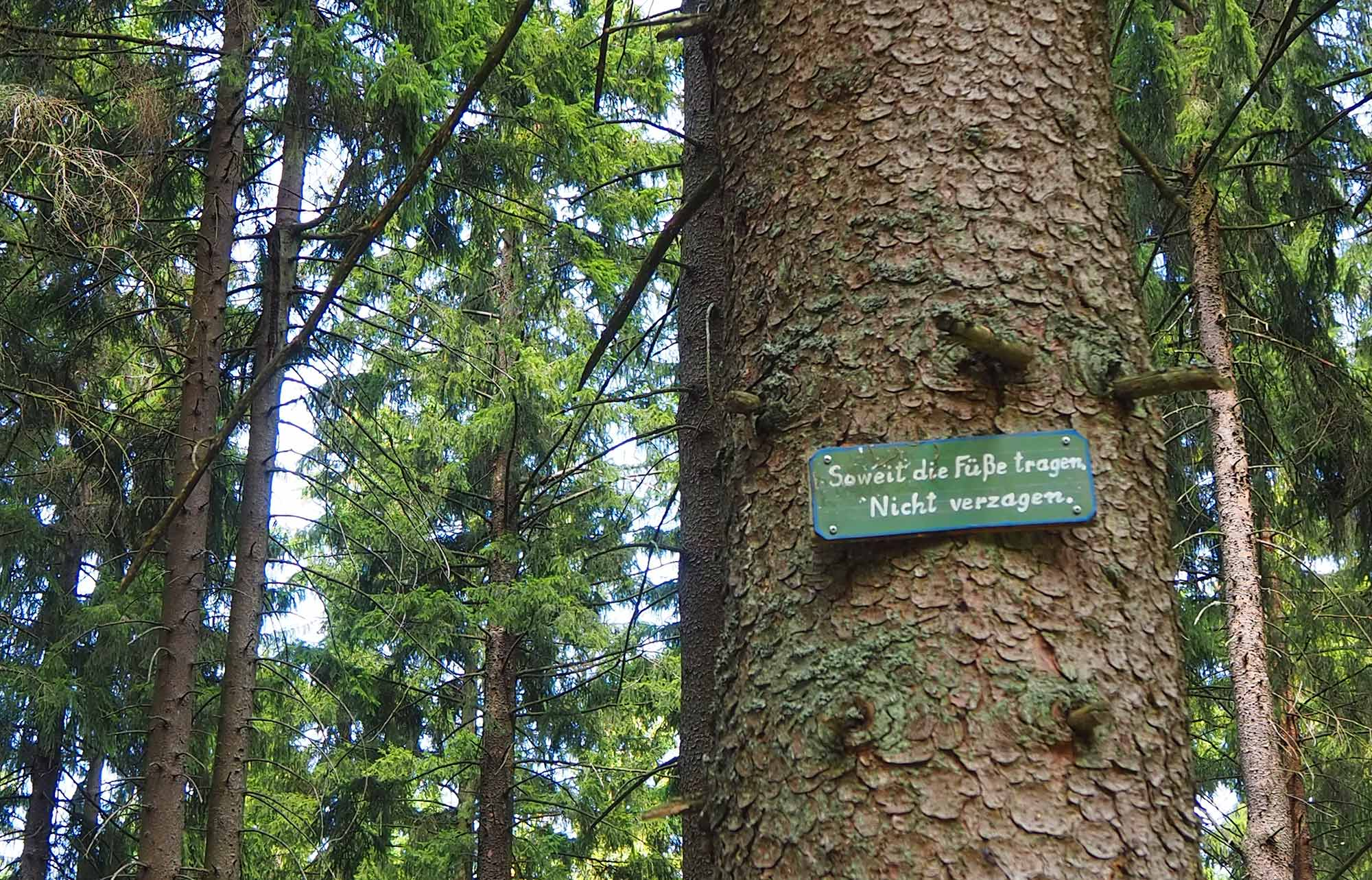 Motivation auf Waldwegen