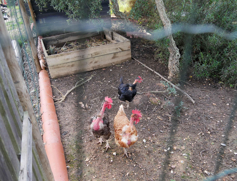 Der Hühnerstall und die Filter-Dünger-Anlage