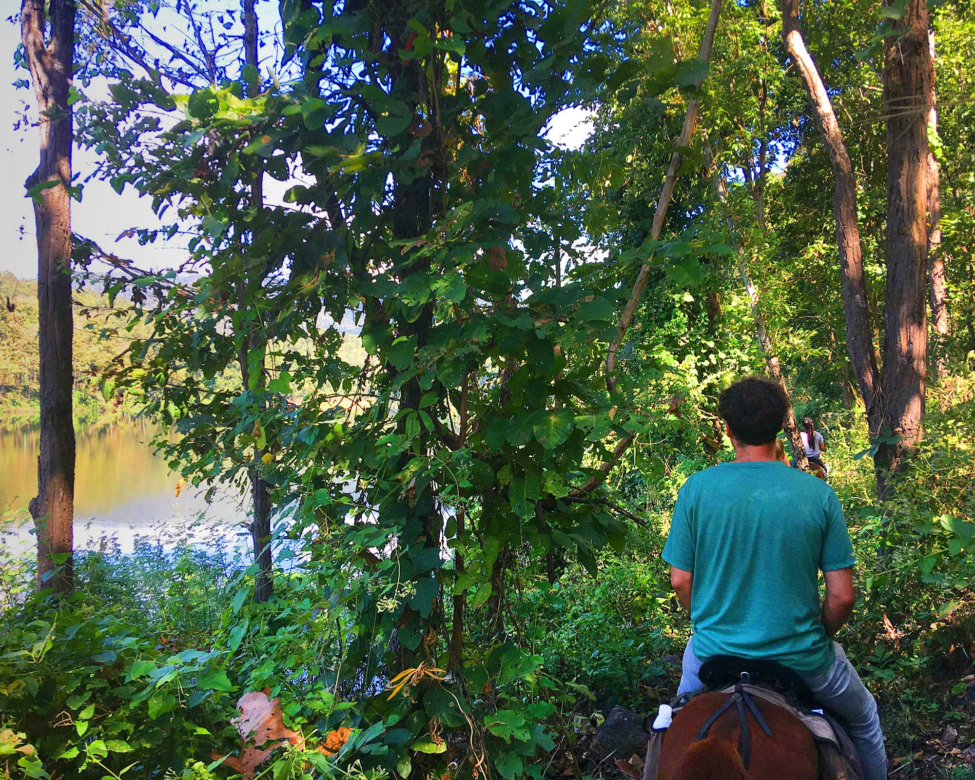 Durch den Dschungel reiten