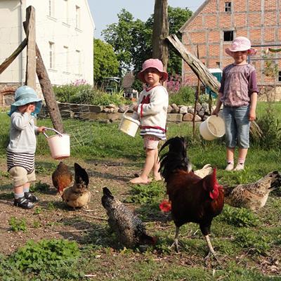 Kinder helfen beim Hühner füttern