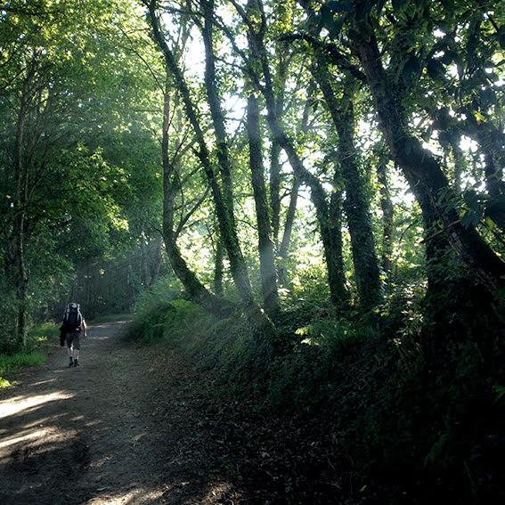 Durch Wälder wandern