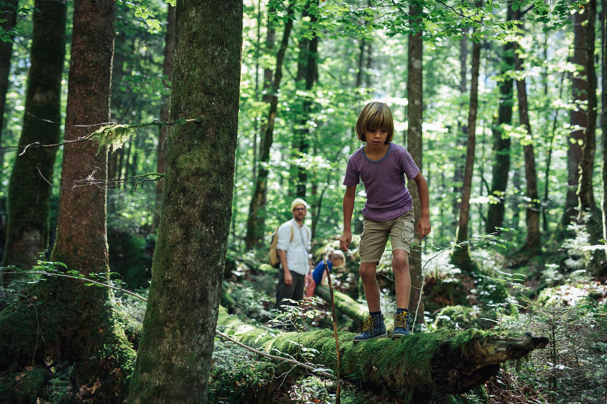Im Wald bei Hallstatt wandern gehen
