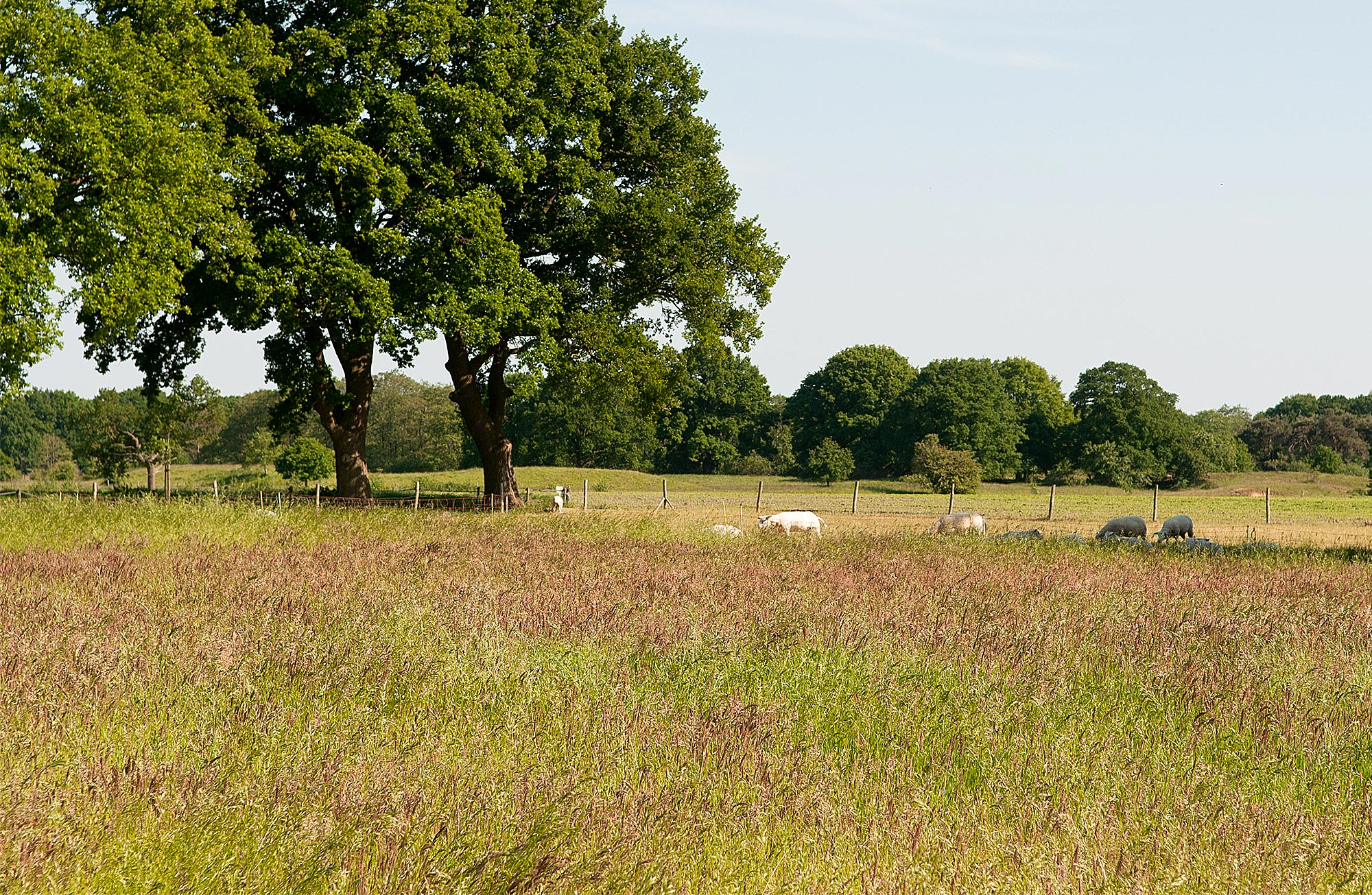 Die hübsche Landschaft von Overijssel entdecken und genießen