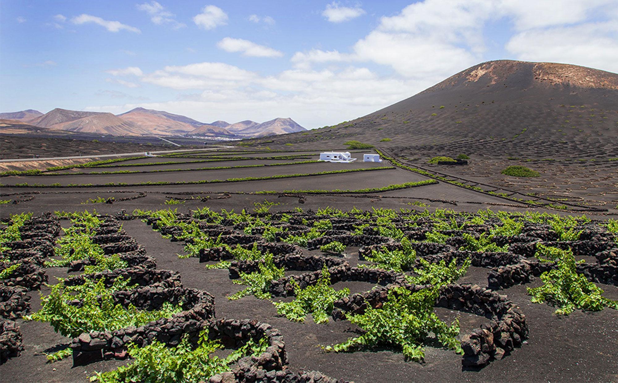 Lanzarote ist schroff, weitläufig, durchzogen von Vulkankratern und Geysiren