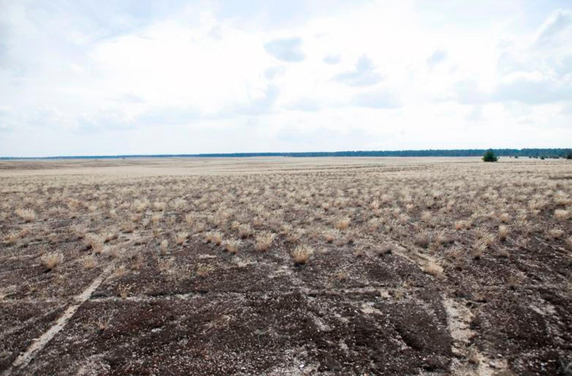 Die größte Wüste Deutschlands befindet sich in Brandenburg