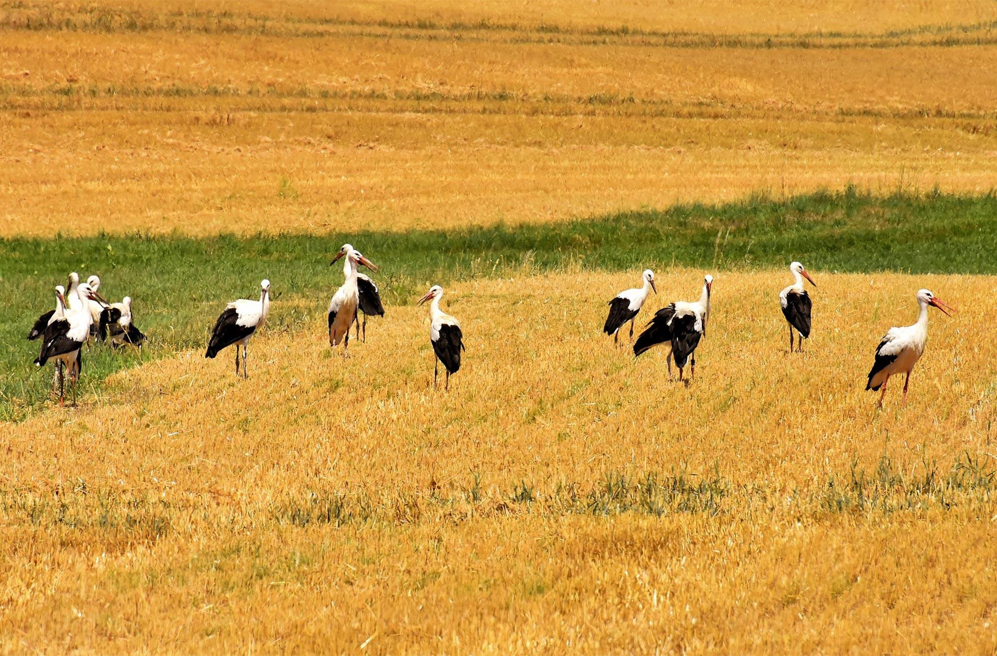 Auch Storche finden in den Schutzgebieten ein Zuhause