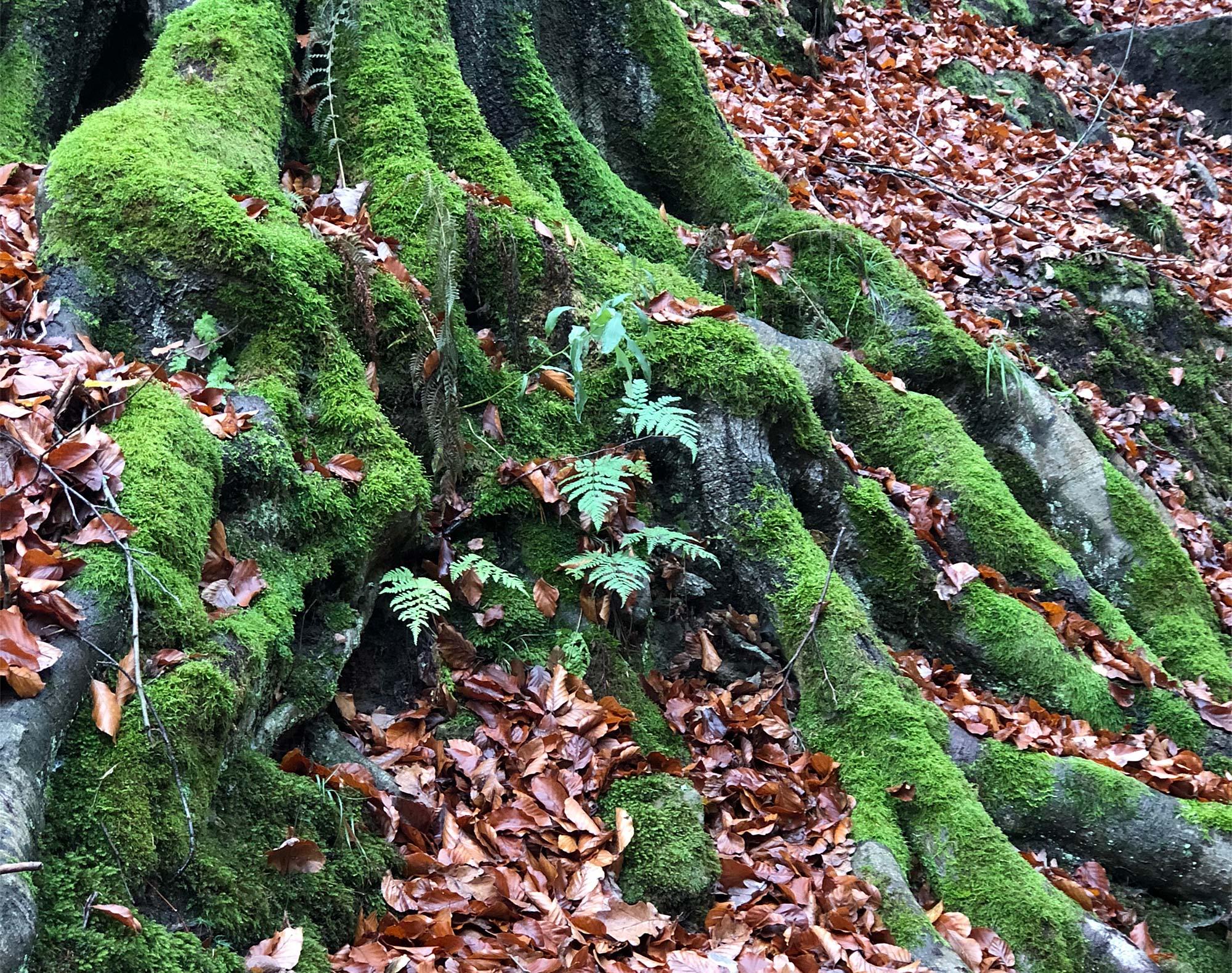 Die Naturlandschaft wirkt jetzt in der kälteren Jahreshälfte mystisch