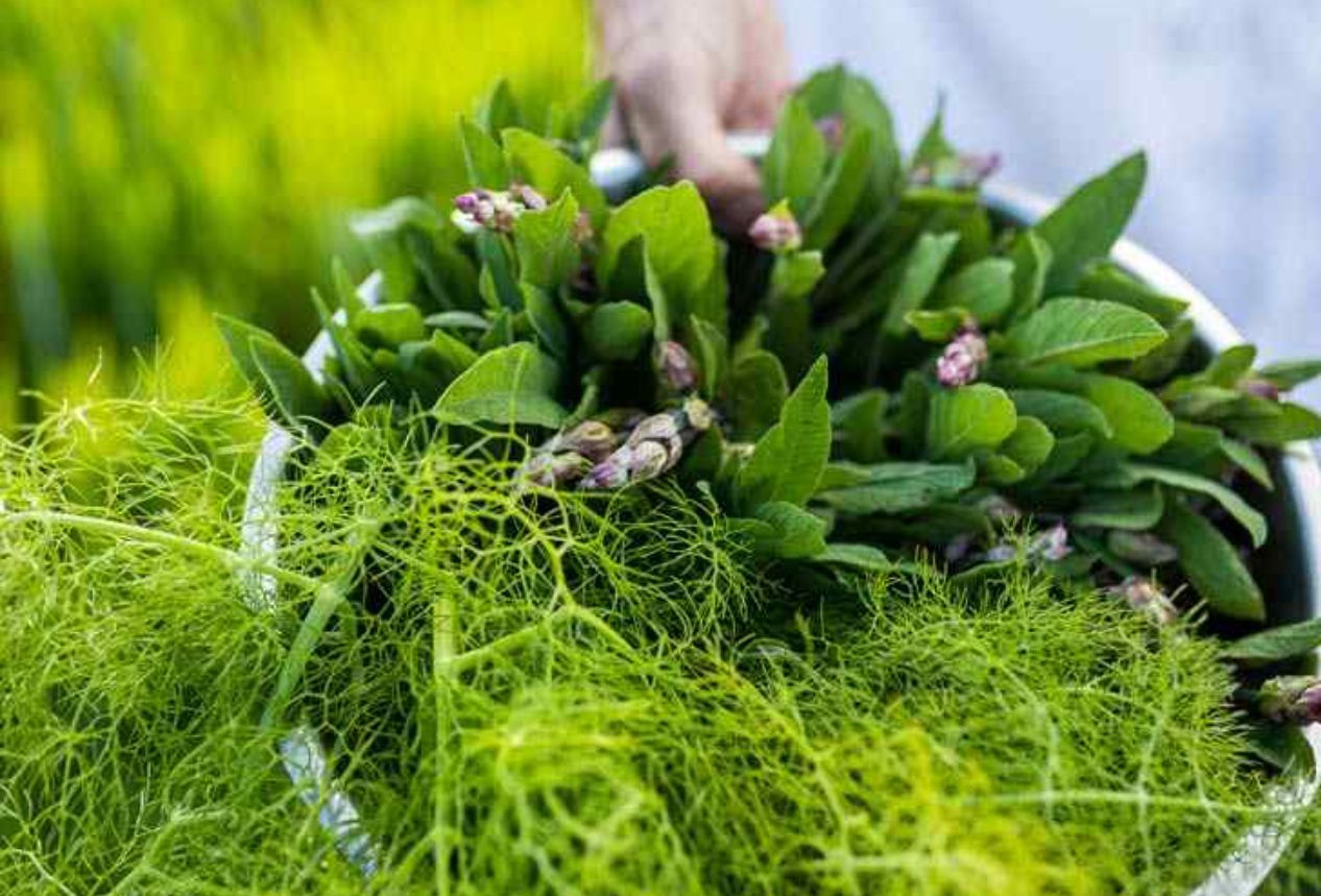 Alle verwendeten Produkte stammen entweder aus der eigenen Farm und dem Garten ...