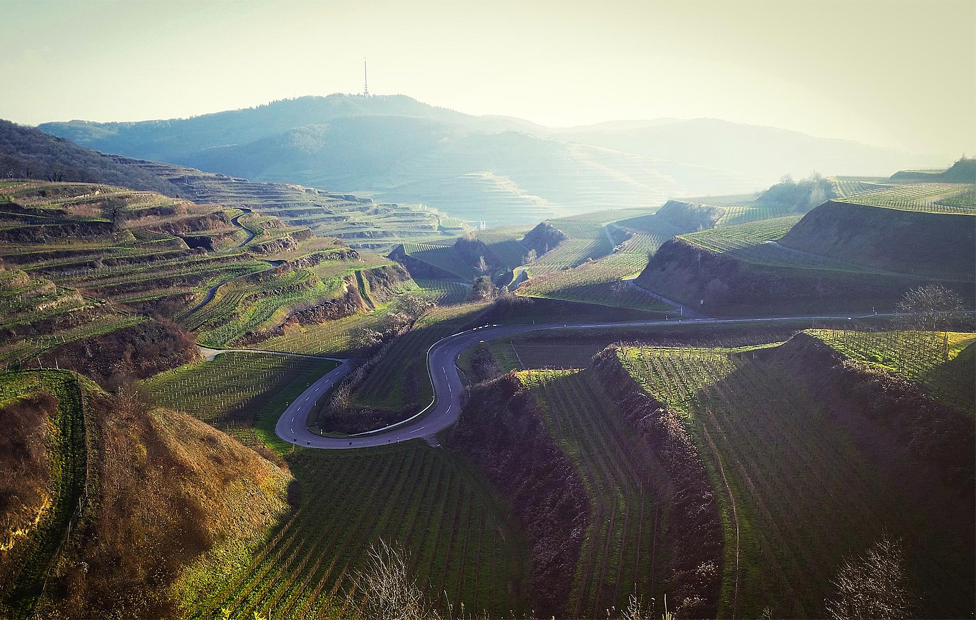Die Weinterrassen rund um den Kaiserstuhl im Schwarzwald / Fotocredits: holgiverfolgi via Pixabay