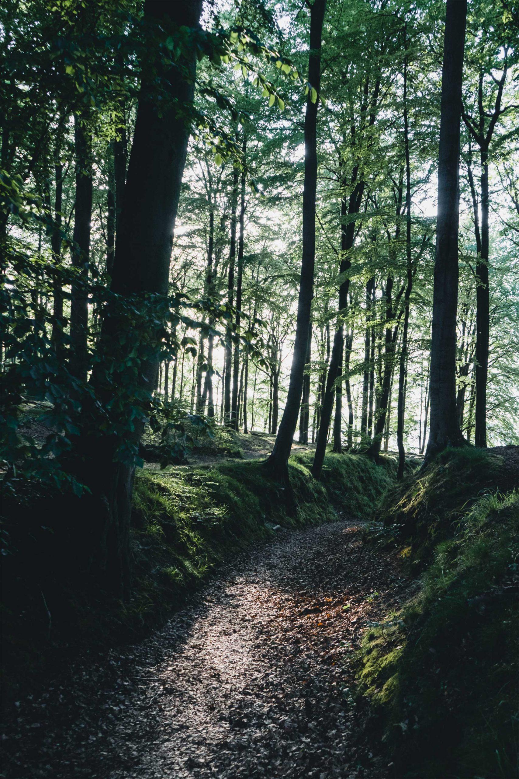 Wanderung entlang des Hochuferweges zur Teufelsschlucht