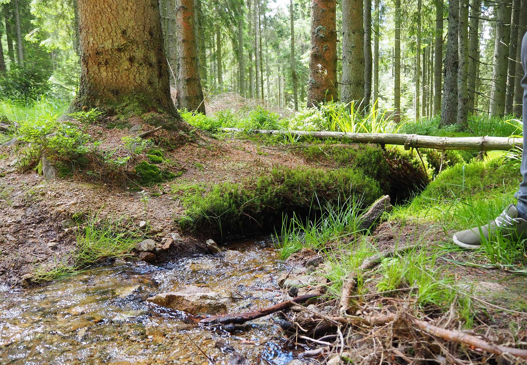 Der grüne Böhmerwald im Sommer