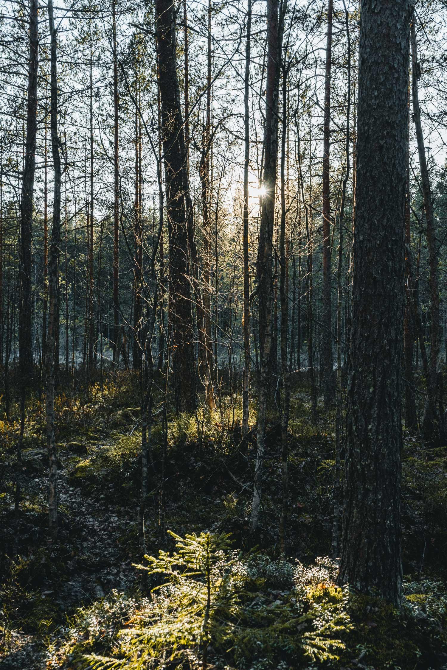 Der Nuuksio Nationalpark unweit von Helsinki