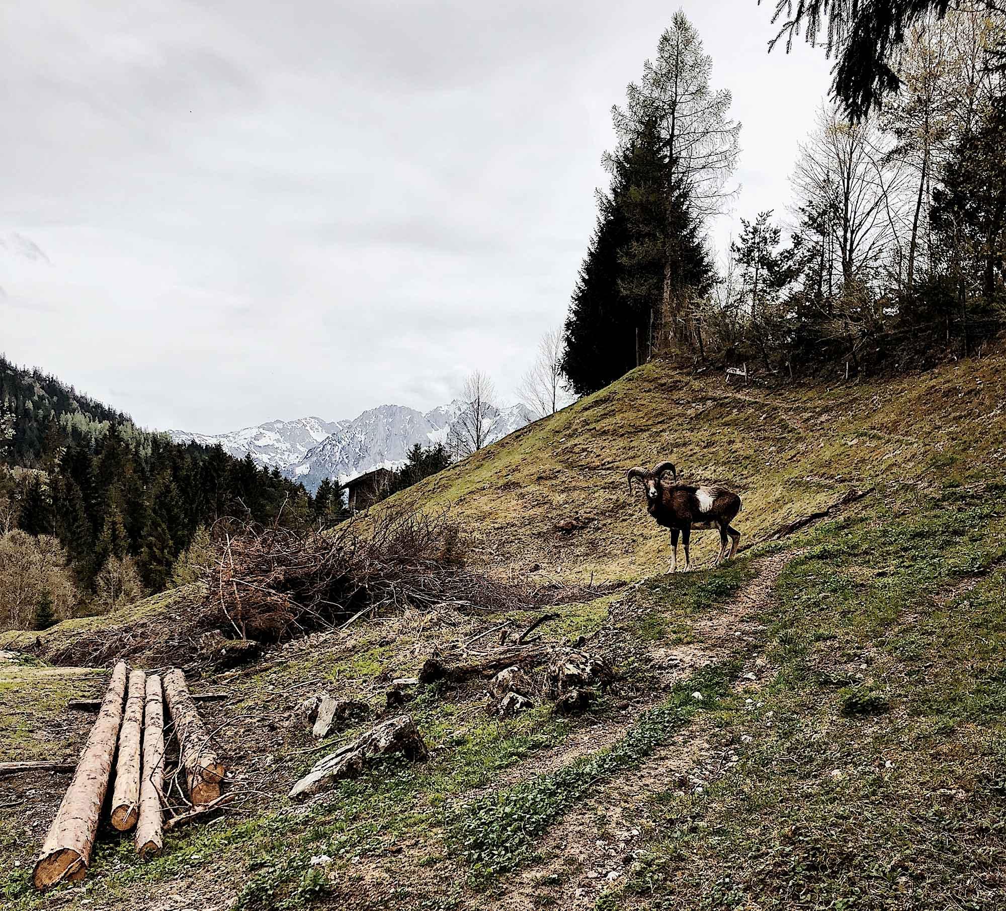 Die imposante Berglandschaft des Chiemgaus auf einer Wanderung entdecken