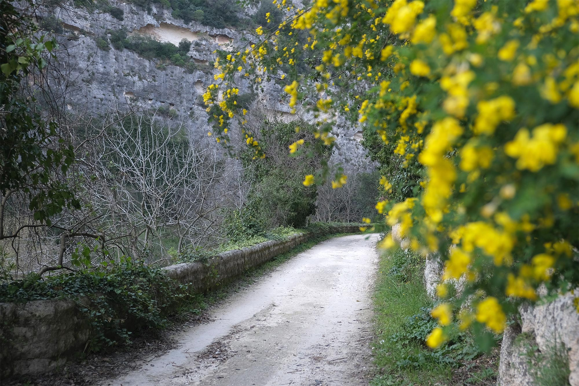Blütezeit in Pantalica