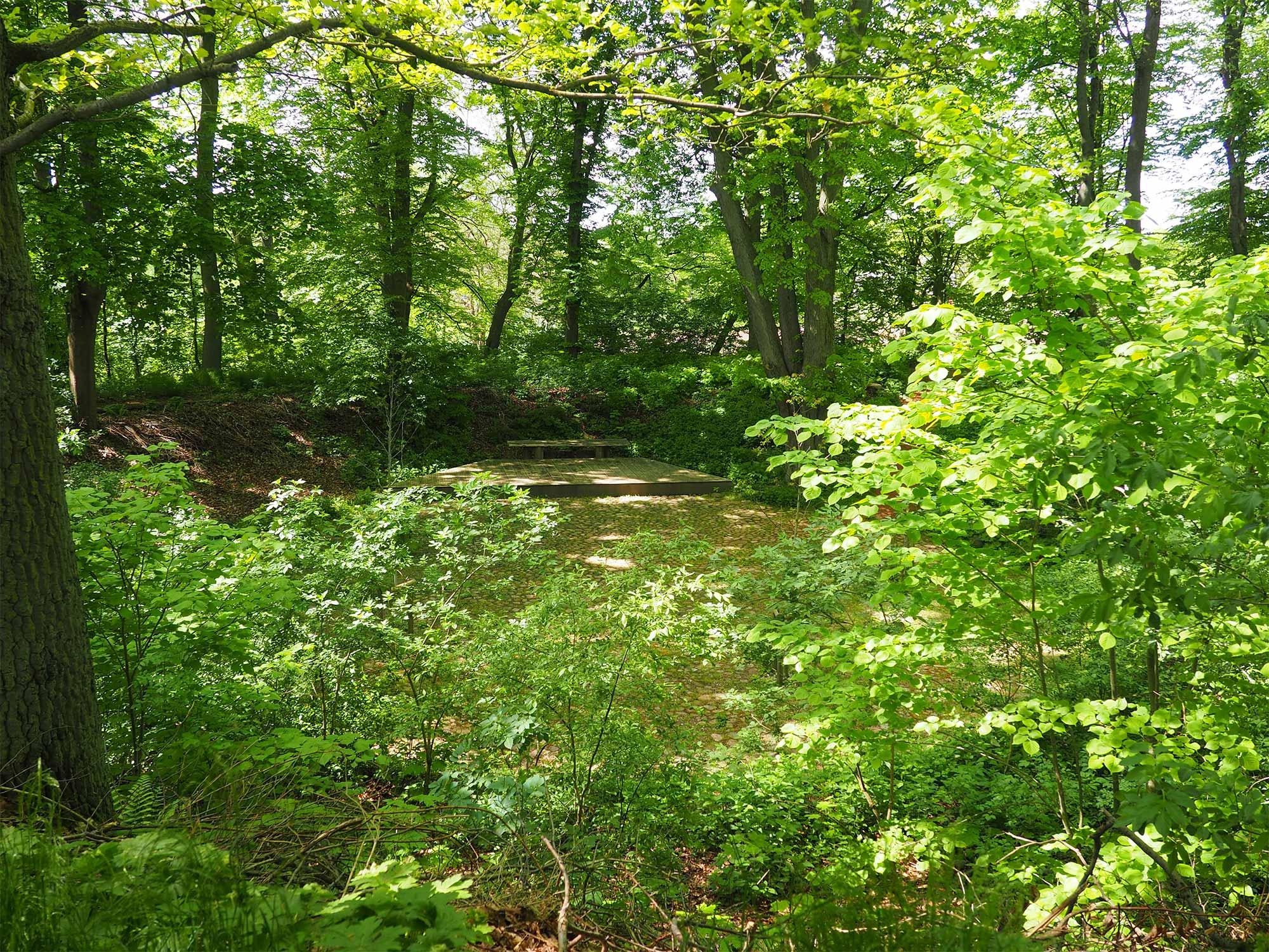 Blick in den grün leuchtenden Wald