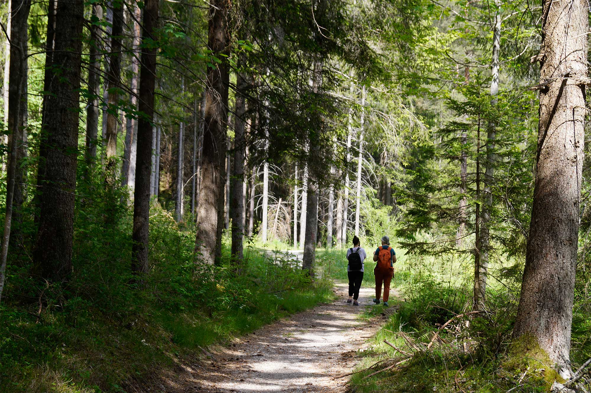 Hiking in Tyrol's green forests