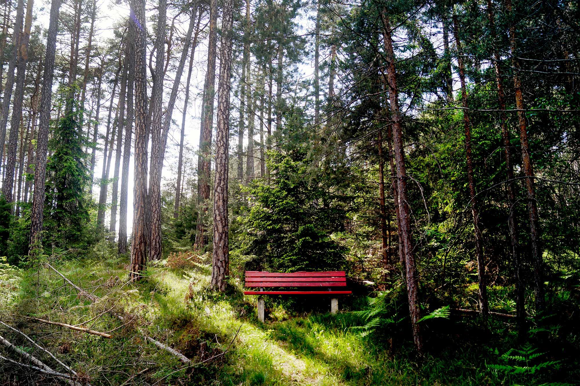 Waldbaden in Obsteig